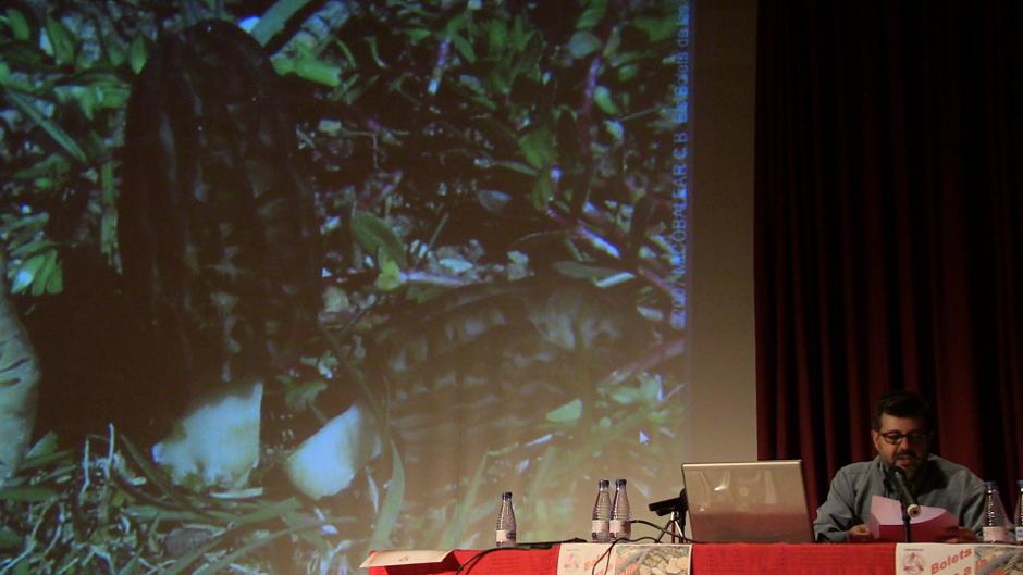 Bolets i Fongs de La Foia de Castalla: La Múrgola
