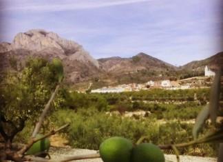El 'Projecte Diània' planteja la revalorització de l'entorn i la producció d'oli d'oliva autòcton