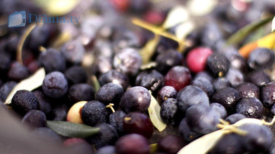olives-dianiques