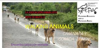 pepaL'associació PEPA organitza una passejada amb animals a Castalla el pròxim diumenge