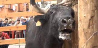 Cassola Sense Corda reflexiona sobre el maltractament animal a les festes de la Puríssima d'Ontinyent